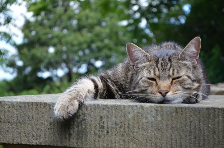 cats-168144_1280